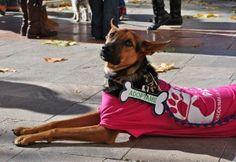 Imagen por Mar Roldán Cubillas http://basicfront.easypromosapp.com/voteme/134217/625170684?ref=ext ¡¡Solo necesito 10 votos más!! ¡No son nada! :'( ¿Me ayudas? ¡Gracias! :D  #photography #fotografía #concurso #imágenes #image #historia  #nikon #dog #puppy #puppies #perro #chien #adopción