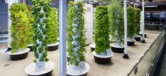 Aeroponic Garden in the upper concourse of O'Hare Airport.