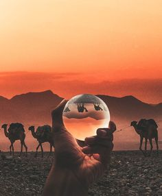 Lensball is a sleek crystal ball that allows you to capture deeply immersive experiences in ultrasharp wide-angle. Wide Angle Photography, Desert Photography, Perspective Photography, Photography Lessons, Abstract Photography, Artistic Photography, Digital Photography, Amazing Photography, Landscape Photography