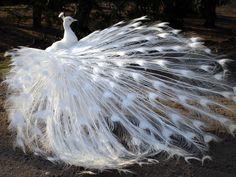 images of beautiful birds   Beautiful Birds - Daydreaming Photo (32782291) - Fanpop fanclubs