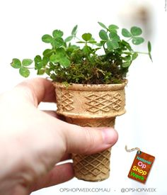 Biodegradable Plant Ice Cream Cones. How awesome is this? Upcycle, recycle and be creative.