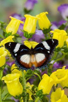 27Butterflies And Moths