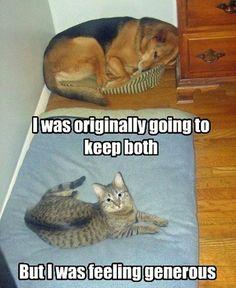 Kind Kitty