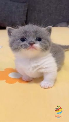 Cute Little Kittens, Cute Baby Dogs, Baby Cats, Super Cute Animals, Cute Little Animals, Kittens And Puppies, Cute Dogs And Puppies, Funny Cute Cats, Cute Funny Animals