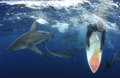 This scientist is testing a shark proof surfing board. So far, it seems to work.