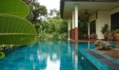 Rent House in Thailand !#holiday #travel #pool #thailand #new #year #sun