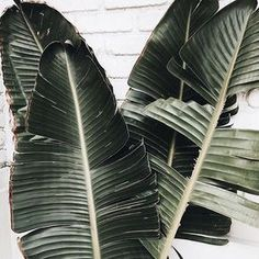Image de green, plants, and nature
