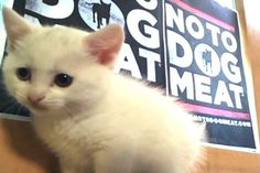 #NoToDogMeat We love our cats as much as our dogs.36 in our shelter waiting for homes.
