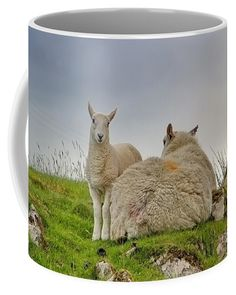 Little Lamb With Its Mother Coffee Mug by Ren Kuljovska.  Small (11 oz.) Photo On Mug, Mugs For Sale, Photography Awards, Husband Love, Great Bands, Travel Photographer, Basic Colors, How To Be Outgoing, Color Show