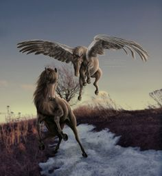 """""""If you're a bird, then I'm a bird."""" Started this ages ago, had a hankering to manip tonight, found this in my folders about done, figured I should . Fantasy Creatures, Mythical Creatures, Different Horse Breeds, Enchanted Fairies, Fantasy Pictures, Unicorn Art, Centaur, Another World, Pegasus"""