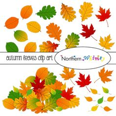 Autumn Leaves Clip Art Set  Fall Clipart  by NorthernWhimsyDesign