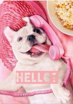Hello? The dog is using the phone ?!