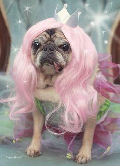 Our little Pugs and Kisses fairy pug, Clara!!!   Fairy Pug 5x7 Pug Greeting Card by Pugs and Kisses