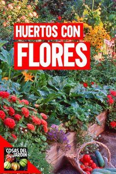 Avocado Tree, Terrace Garden, Beautiful Gardens, Bedrooms, Cupcakes, Gardens, Tomato Plants, Herb Garden, Flowering Plants