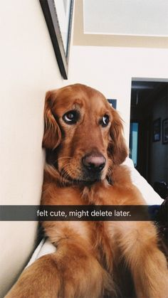 """17 """"Feeling Cute"""" Animal Selfie Memes That Have Been Bestowed Upon The Public - World's largest collection of cat memes and other animals Cute Funny Animals, Cute Baby Animals, Funny Dogs, Animals And Pets, Funny Memes, Cute Dogs And Puppies, I Love Dogs, Doggies, Puppies Puppies"""