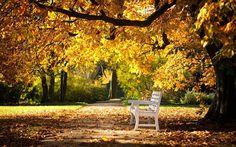 Wallpaper Anak Muda: Park Bench HD Wallpapers - Jan