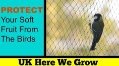 How To Net Soft Fruit  Protection From Birds