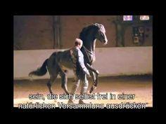 Droga konia - film dokumentalny - polskie napisy This is amazing with ideas. Documentaries, Youtube, Horses, Film, Pets, Animals, Ldr, Restore, Spirit
