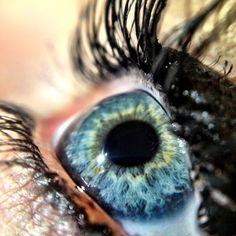 iPhone Macro photography tips !  SquidCam iPhone Macro Lens: Enjoying the Little Things!