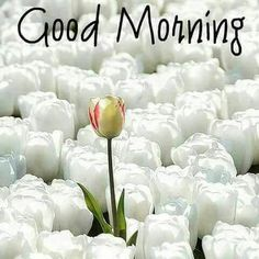 Good morning Have a nice day Happy Morning Quotes, Morning Greetings Quotes, Good Morning Messages, Good Morning Wishes, Night Pictures, Morning Pictures, Morning Images, Morning Pics, Good Morning World
