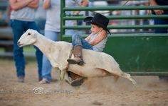 mutton busting my favorite event!