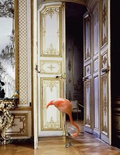Karen Knorr - The Battle Gallery [Château Chantilly] Flamingo + Marie Antoinette! Magnificent Beasts, Purple Cow, Blue Green, Between Two Worlds, Through The Looking Glass, Science Art, Art Forms, Alice In Wonderland, Art Nouveau
