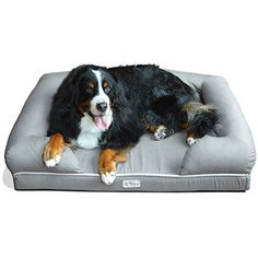 PetFusion Ultimate Dog Bed Lounge XLarge Slate Gray 44 x 34 x 10 Premium Edition w Solid 4 Memory Foam Replacement covers also available ** Click image for more details. Cheap Dog Beds, Cool Dog Beds, Large Dog Breeds, Large Dogs, Orthopedic Dog Bed, Dog Pillow Bed, Lounge, Pet Beds, Dog Care