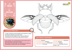 """Bring some colour into your life with these scientifically sound colouring pages! 🎨🦋 For both kids and adults 😊 Did you know that drawings are often used in entomology (""""insect-ology"""")? Some physical characters are not always clearly visible on a photo. With the help of drawings, we can get a better idea of the shape and structure of the animal or characteristic being examined 🤓 Colouring Pages, The Help, Photo And Video, Drawings, Museum, Characters, Shape, Animal, Kids"""