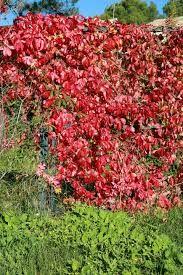 Villvin Garden, Plants, House, Garten, Home, Lawn And Garden, Gardens, Plant, Gardening