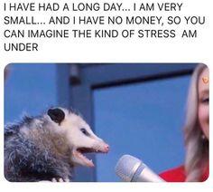 10 Animal Memes