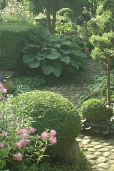 hedges, hostas, stone garden path