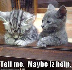 kittenssss