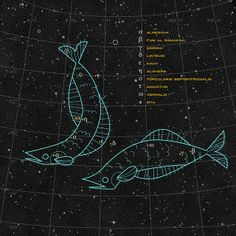 Pisces | Flickr - Photo Sharing!