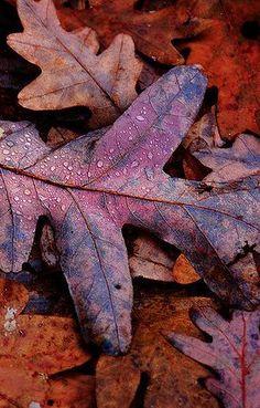 Colors ~ Purple and Orange