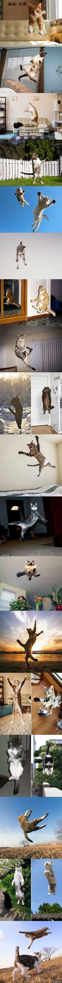 Uçan kedilerrr