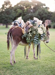 donkey loaded with ribbons and flowers .. sigh...   Photography: Jose Villa Photography - josevillaphoto.com  Read More: http://www.stylemepretty.com/2014/04/09/wedding-day-inspiration-from-the-jose-villa-mexico-workshop/