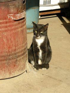 Furry Tom, Black Cats, Kitty Kitty, Oreo Cookies, Lovable Animals