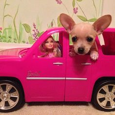 No matter how small your car, dogs will want to stick their heads out the window: | 15 Life Lessons We've Learned From Barbie Dolls