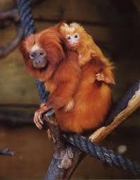 Resultado de imagem para gravuras dos animais do jardim zoológico de lisboa