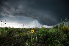 A sunflower shines bright against the dark storm in the Texas panhandle. Storm Photography, Photography Projects, Landscape Photography, Nature Photography, Wall Art Pictures, Print Pictures, Wild Sunflower, Sunflower Photography, Sunflower Pictures