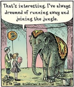 The circus is not a suitable home for animals, especially wild animals like elephants and tigers. The trainers are often abusive and the lifestyle extremely stressful with little or no opportunity for the animals to behave naturally.