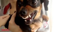 Funny animals. Funny pets. Pets Angry with Their Owner or Showing the An...