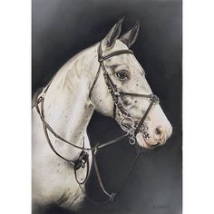 Latest horse portrait commission. I'd forgotten how difficult white horses were.    #horserider #horsey #horse #equestrian #equine #horseart #horsephotography #mare #cob #horseracing #horsejumping #showjumping #horsepainting #art #pastelpainting #pastels