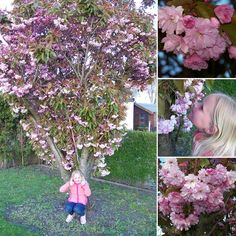Mooie roze #bloesem