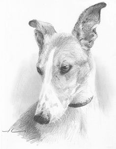 charcoal drawings of greyhounds - Google Search