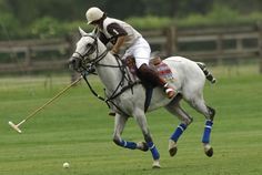 polo horse pictures | Justice Denied | I Love Polo