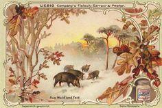 """Sammelbildserie """"Aus Wald und Feld"""" umfasst 6 Bilder, erschienen 1900"""