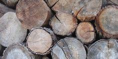 Inaga confirma la autorización ambiental a la planta de biomasa de Monzón. EFE/Nacho Gallego