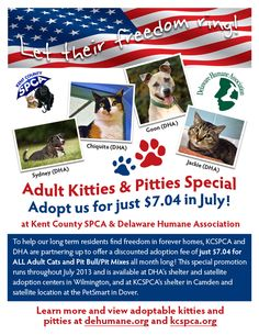 Adopt any adult cat or Pit Bull/Pit mix for just $7.04 in July 2013 from Delaware Humane Association or Kent County SPCA!