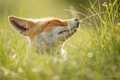 "I've Got Sunshine.... - <a href=""http://www.roeselienraimond.com"">Roeselienraimond.com</a> 